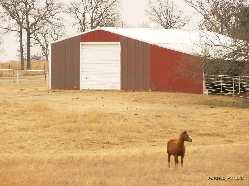 horse in pasture by Angela  Arnold
