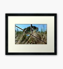 Horton Hears A Who -  Dew Drop - NZ Framed Print