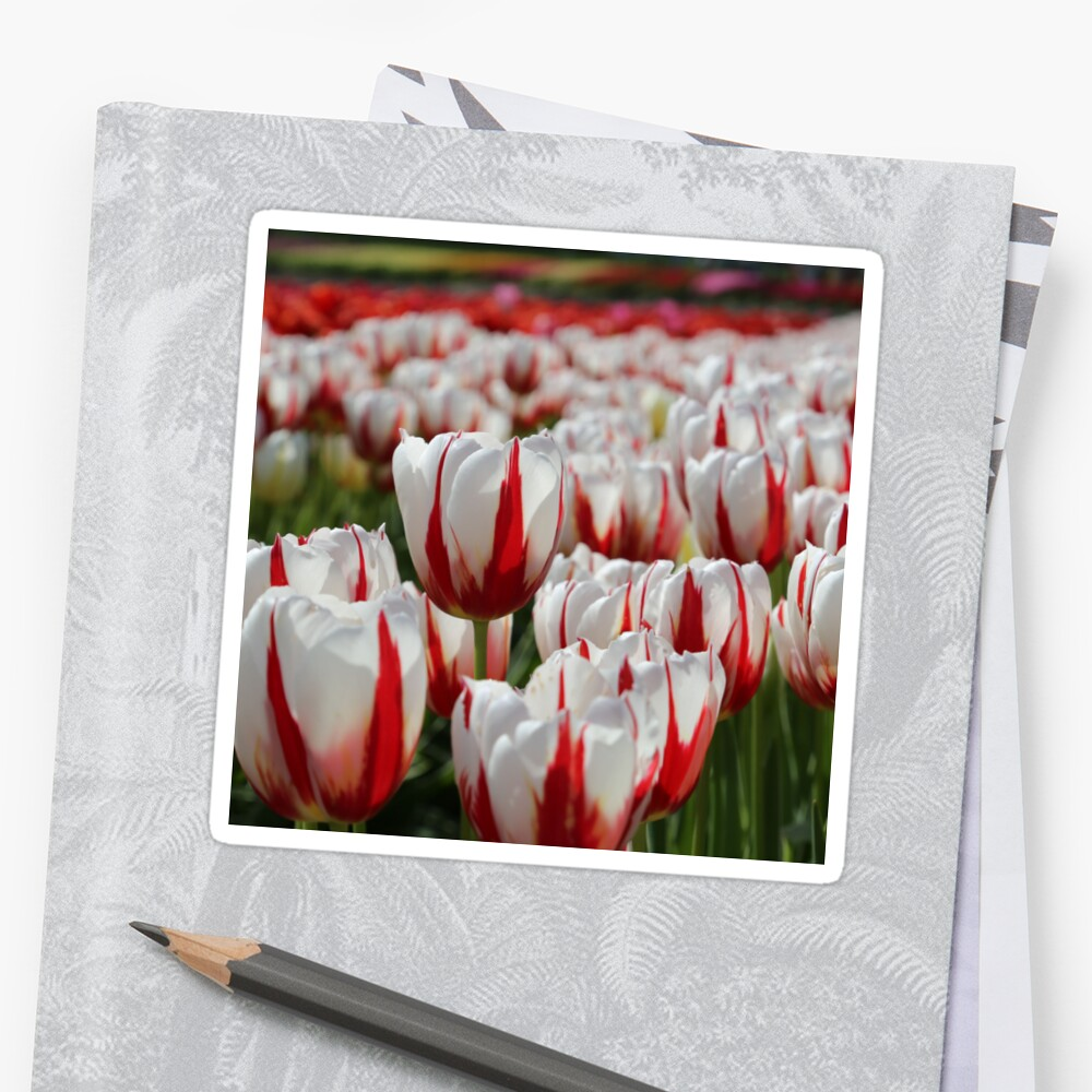 Canada 150 Tulips by PortiaPlaying