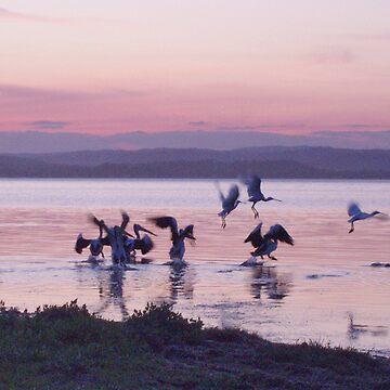 Sunset Again on Tuggerah Lake NSW  Australia by beryl