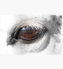 Reflection In A Golden Eye - Horse - VZ Poster
