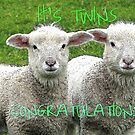 It's TWINS - CONGRATULATIONS - Lambs - NZ by AndreaEL