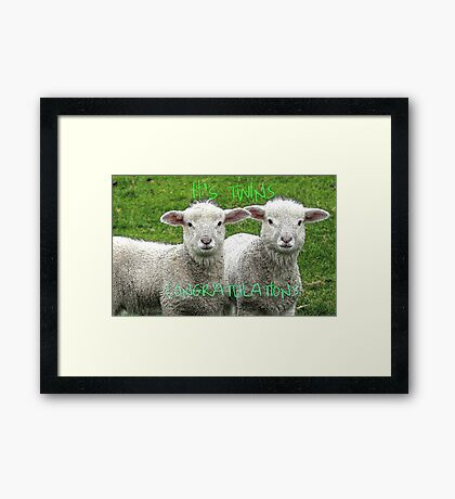 It's TWINS - CONGRATULATIONS - Lambs - NZ Framed Print