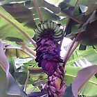 OUR BANANA TREE by WhiteDove Studio kj gordon