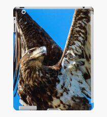 Bald Eagle Immature iPad Case/Skin