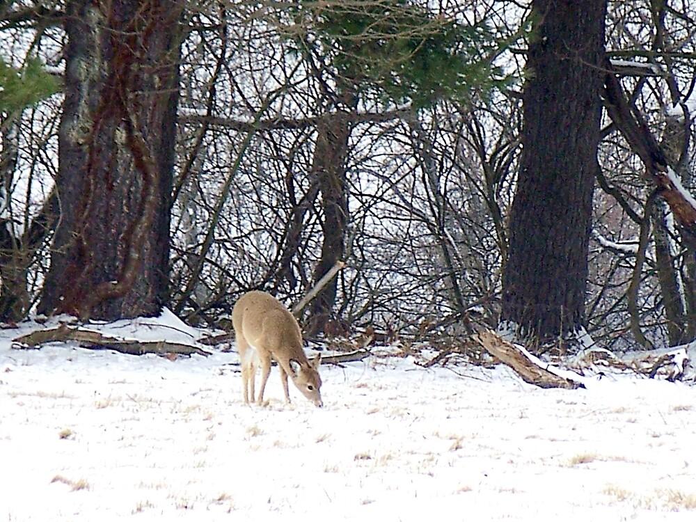 Deer in the Snow by Judi Taylor