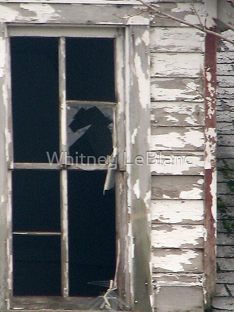 the horse in the window by Whitney LeBlanc
