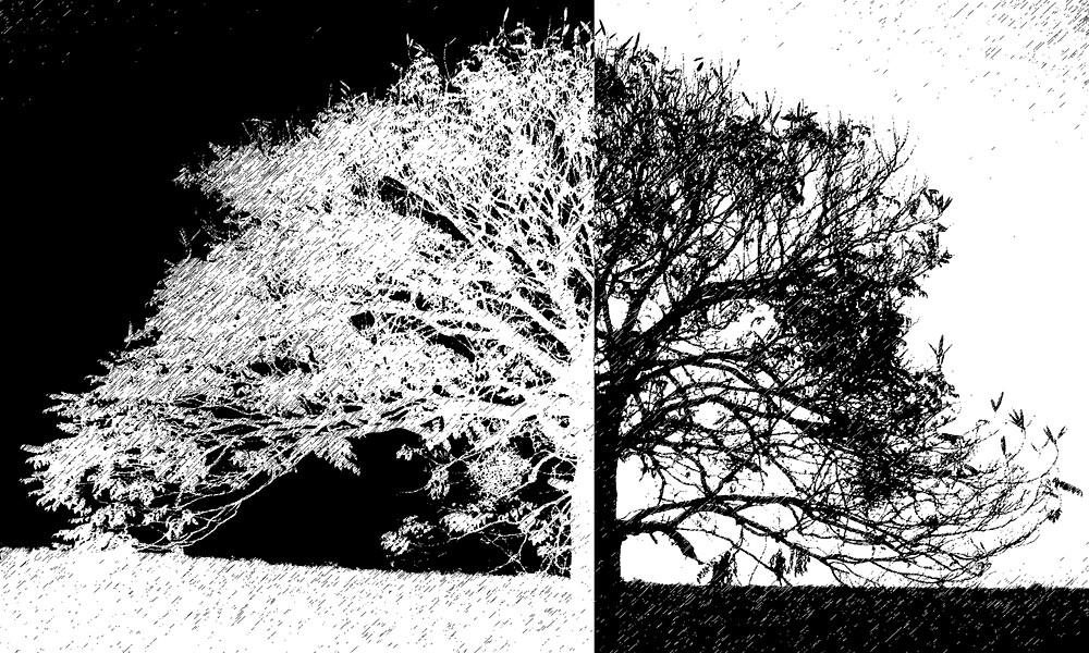 Midnight Tree by Cassie Sitnik