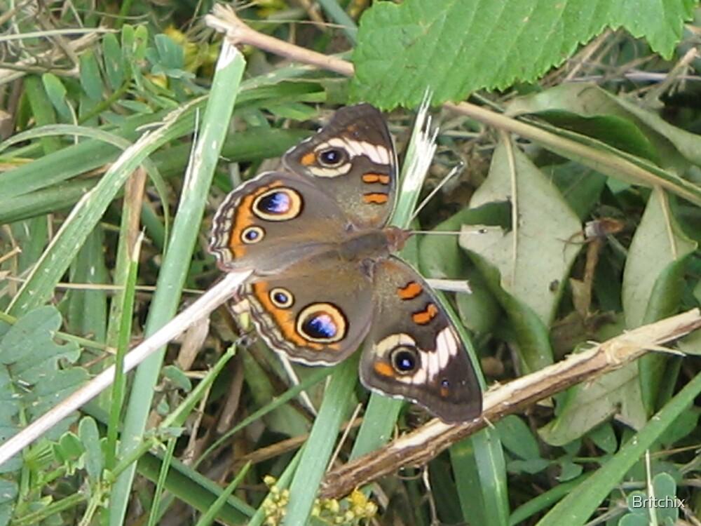 Buckeye Butterfly by Britchix