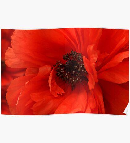 Poppy Palette Poster