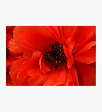 Poppy Palette Photographic Print