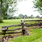 EARLY AMERICAN FENCE by Pauline Evans