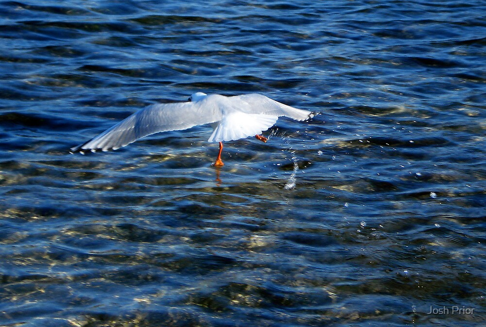 Aquagull by Josh Prior