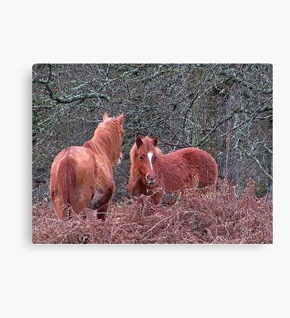 New Forest Ponies Canvas Print