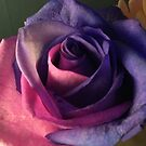 Pink and purple beautiful rose  by LeighSkaf