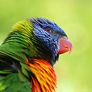 Rainbow Lorikeet - Australia by Mette  Spange