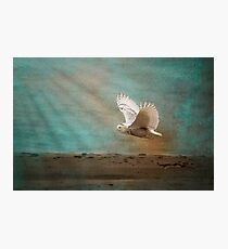 Magical Snowy Owl Photographic Print