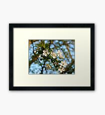 White Cherry Blossom Branch Framed Print