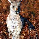 Australian Autumn Colours by Mette  Spange