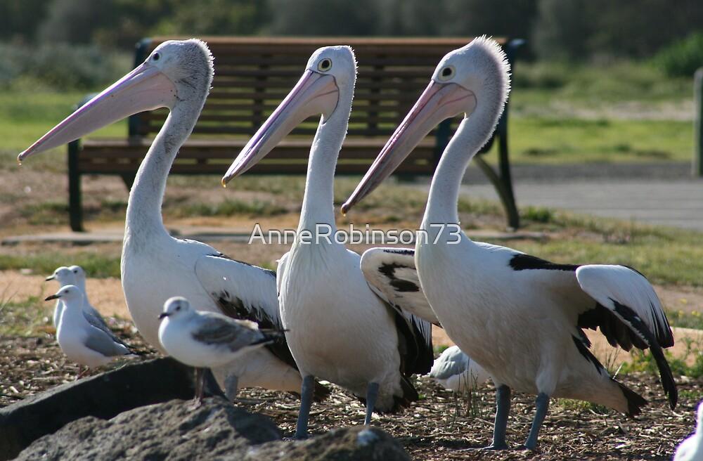 Triplett Pelicans by AnneRobinson73