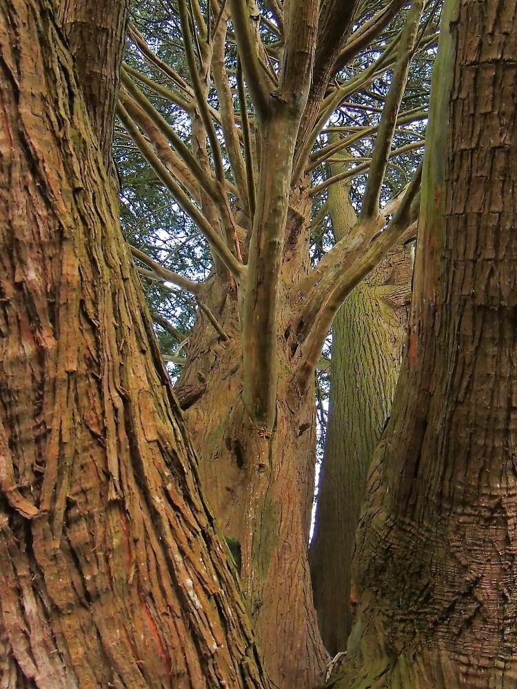 Tree Intricacies by Alexandra Lavizzari