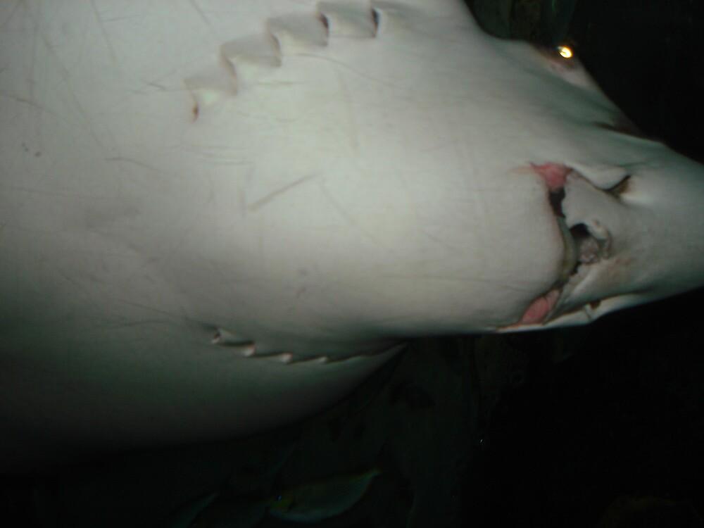 Under Tiger Shark by shaunkaylin
