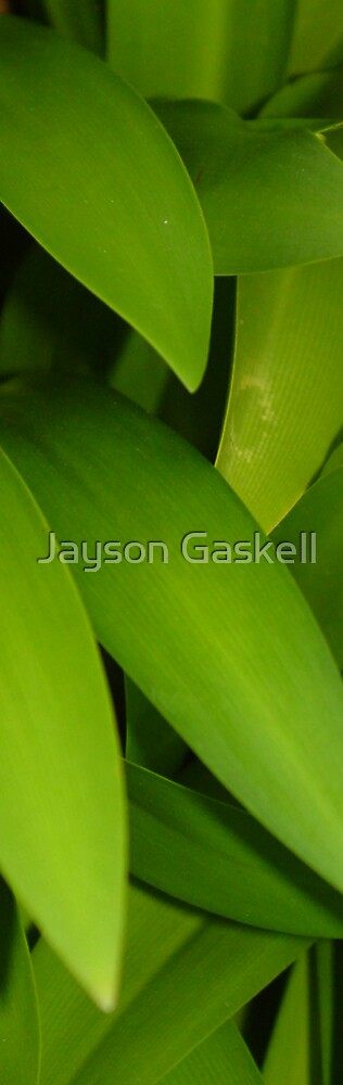 leaves by Jayson Gaskell