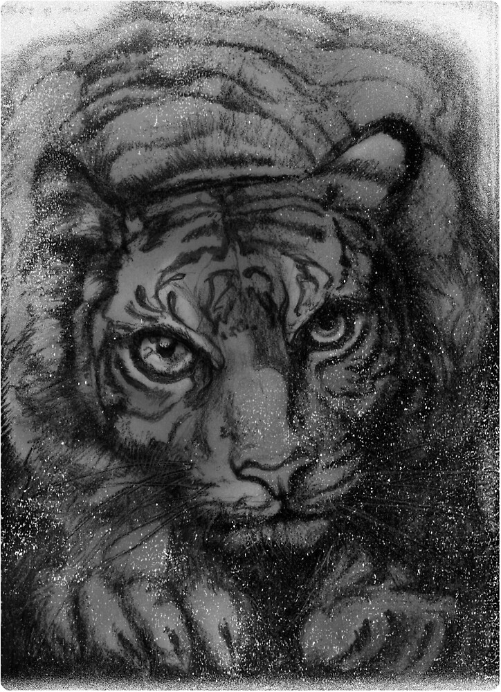 Tiger - greyscale (full T) by David McBurney