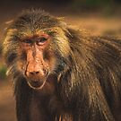 Mr Baboon by Randy Turnbow