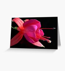 Fuchsia X Greeting Card