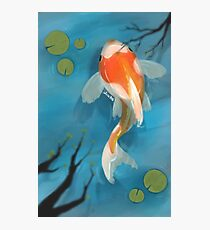 Koi fish in a pond Photographic Print