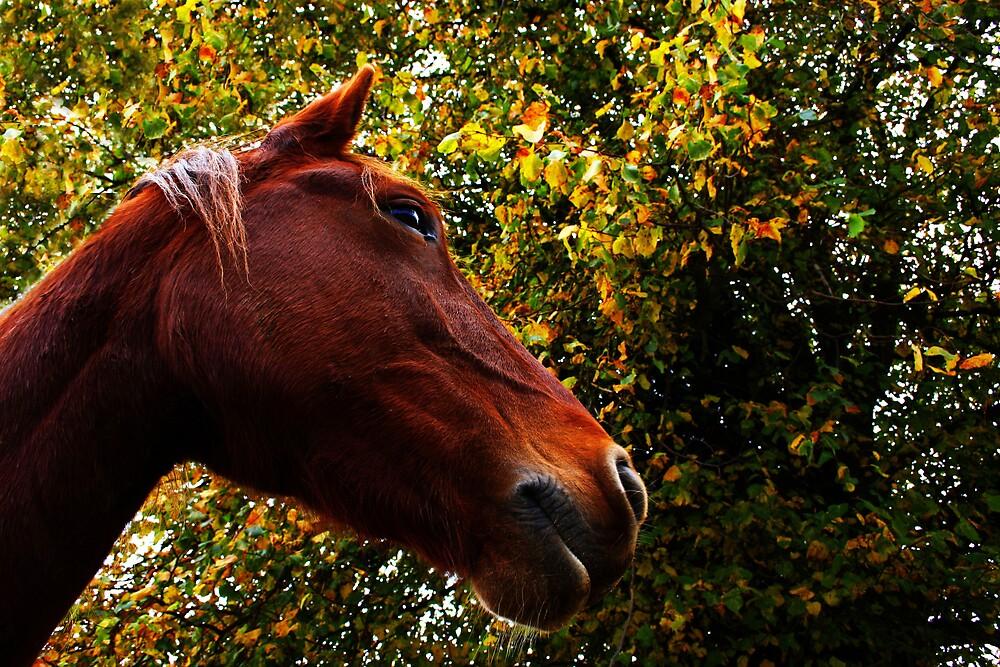 Chestnut by KarenMcWhirter