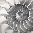 Fibonacci by Celeste Mookherjee