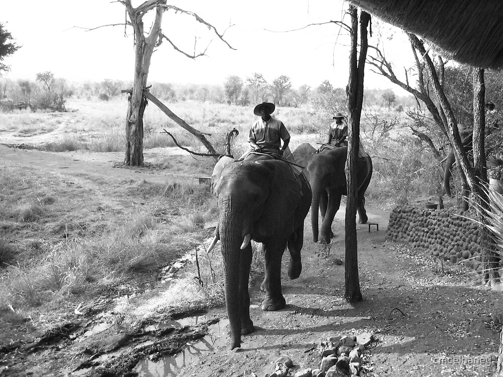 The Elephant camp by cmcelhaney