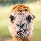 Funny Alpaca by Rob D