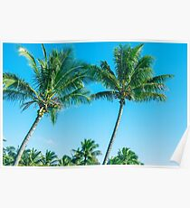 Palm tree Poster