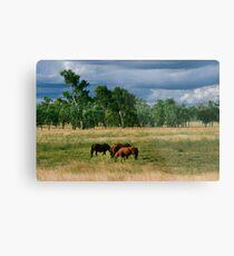 Horses Grazing Metal Print