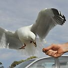 Feeding seagull by Julie Sherlock