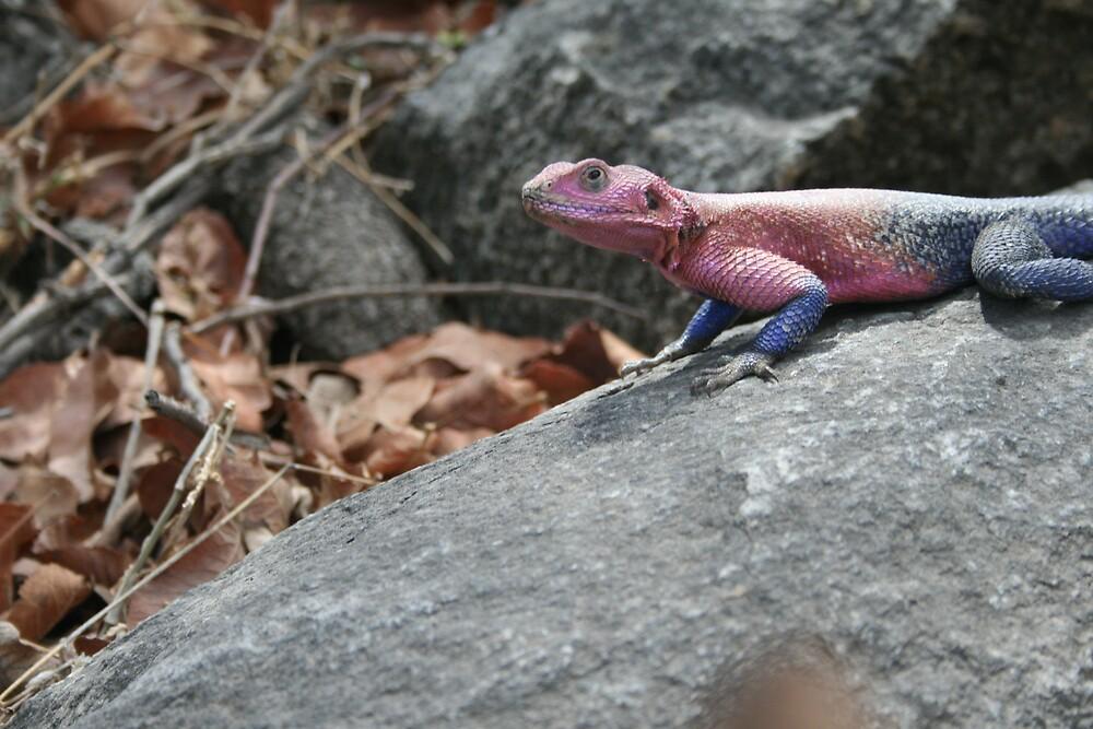 hotheaded lizard by Sharon Cooper