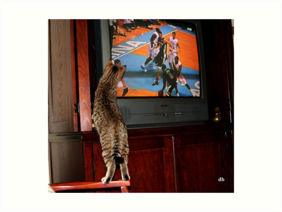 Tarheel Kitty by daniels