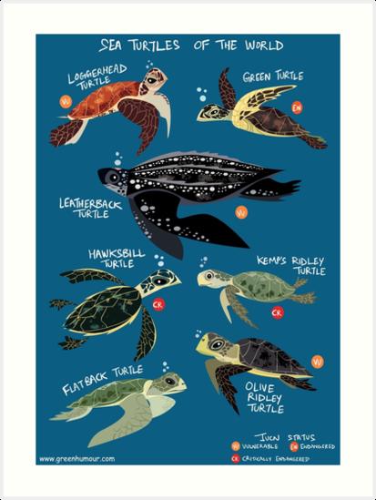 «Tortugas marinas del mundo» de rohanchak