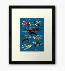 Sea Turtles of the World Framed Print