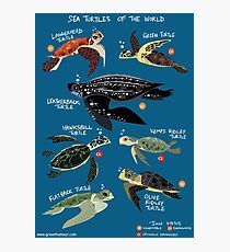 Sea Turtles of the World Photographic Print