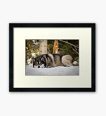 Napping In the Snow Framed Print