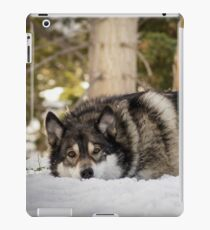 Napping In the Snow iPad Case/Skin