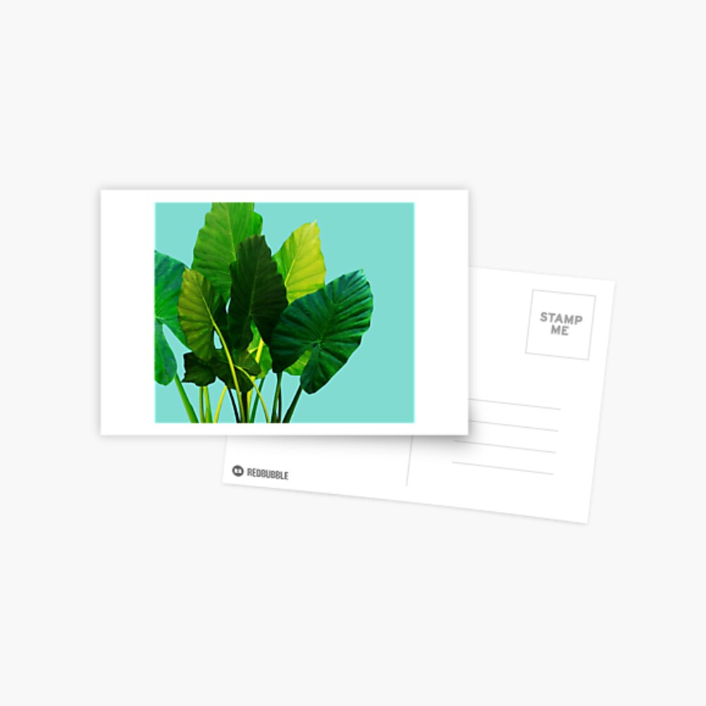 Großstadt-Dschungel Postkarte