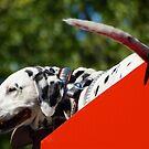 Fire Dog Dalmatian by D-GaP