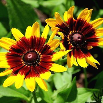 Flowers for 2!!! ©  by Eastsider