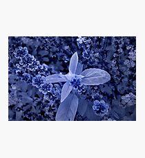 basil flower macro ir Photographic Print