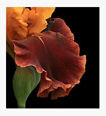 Bronze Iris Photographic Print